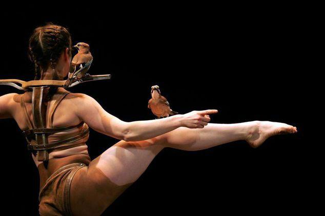 la-confidence-des-oiseaux