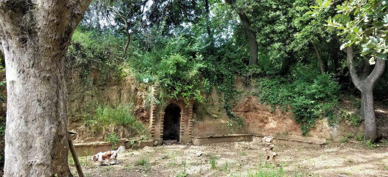 Font de Can Barba, Serra de Collserola, 21-5-2018